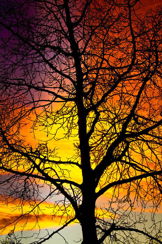Silhouette Art Print featuring the photograph Colorful Silhouette by James BO Insogna