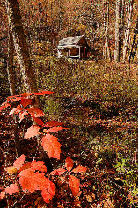 Log Cabin Art Print featuring the photograph Cook Cabin by Alan Lenk