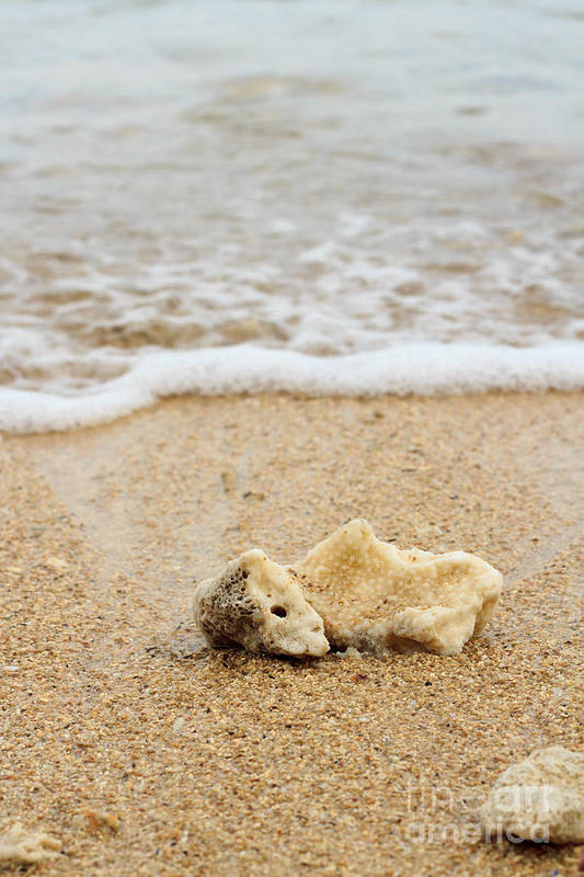 Beach Art Print featuring the photograph Coral On The Beach by Arie Toursino