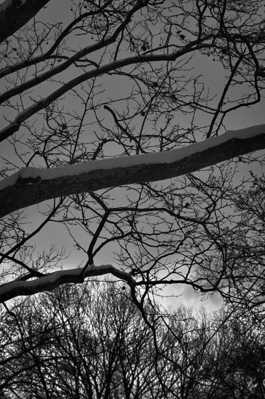 Trees Art Print featuring the photograph Dancing In The Light 2 by Robert Ullmann