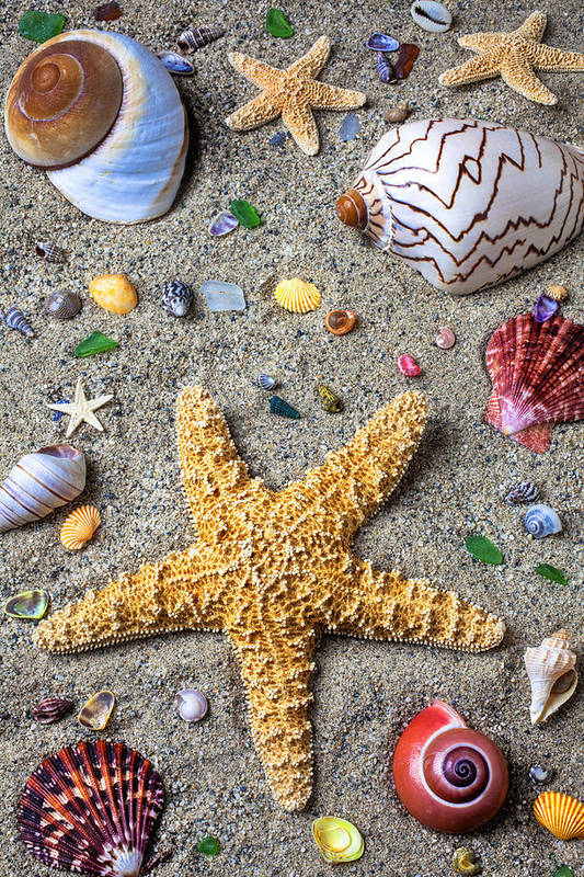 Starfish Art Print featuring the photograph Day At The Beach by Garry Gay