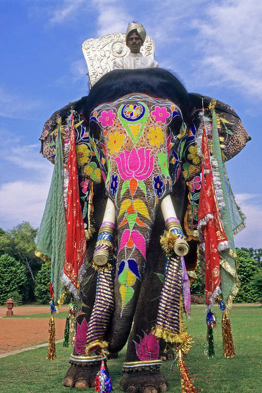 Asia Art Print featuring the photograph Decorated Indian Elephant by Michele Burgess