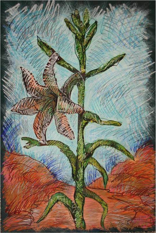 Lily Art Print featuring the painting Desert Lily by Dodd Holsapple
