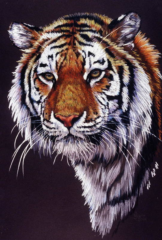 Tiger Art Print featuring the drawing Desperado by Barbara Keith
