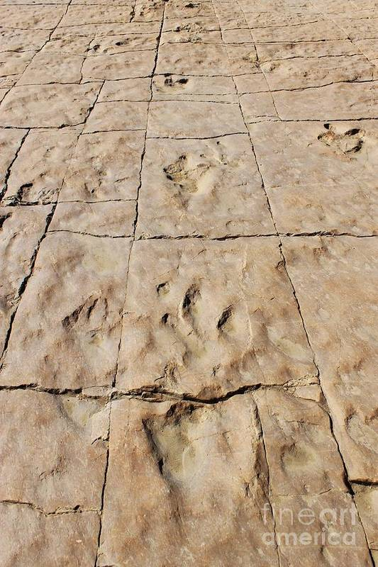 Nature Art Print featuring the photograph Dino Tracks In The Desert 4 by Tonya Hance