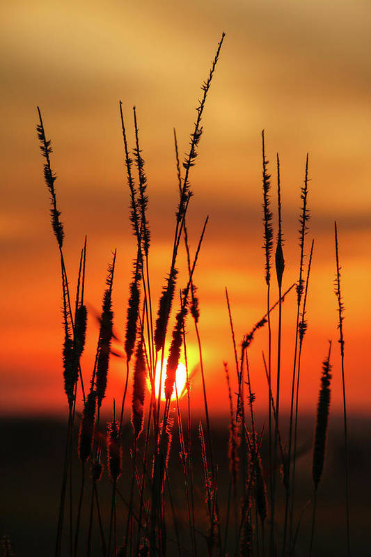 Sunrise Art Print featuring the photograph Dog's Eye View by Connie Higgins