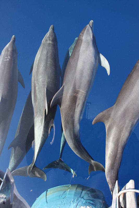 Dolphins Swimming Off The Bow Art Print featuring the photograph Dolphin2 by Arley Atkins