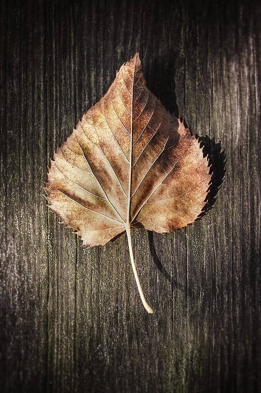 Autumn Art Print featuring the photograph Dry Leaf On Wood by Scott Norris