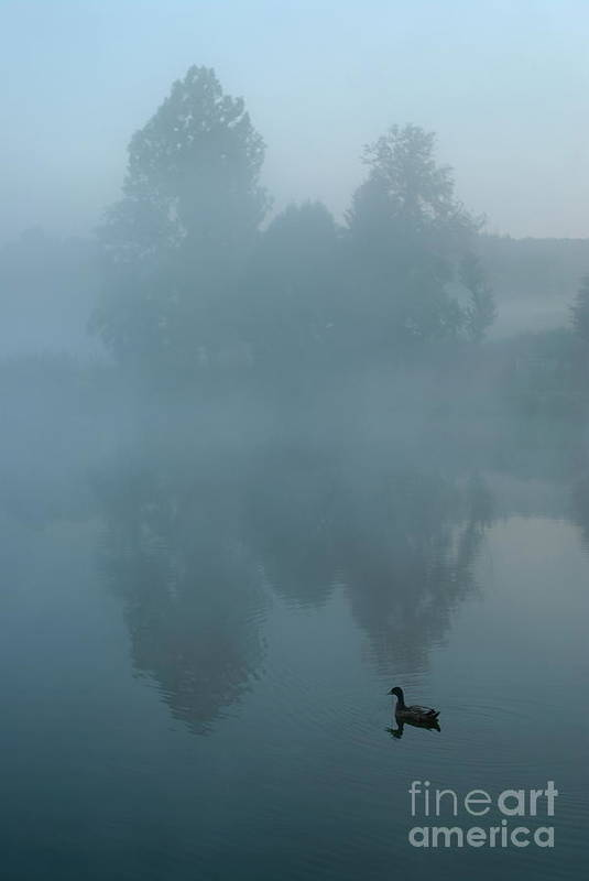 Mystery Art Print featuring the photograph Duck In Pond by Sami Sarkis