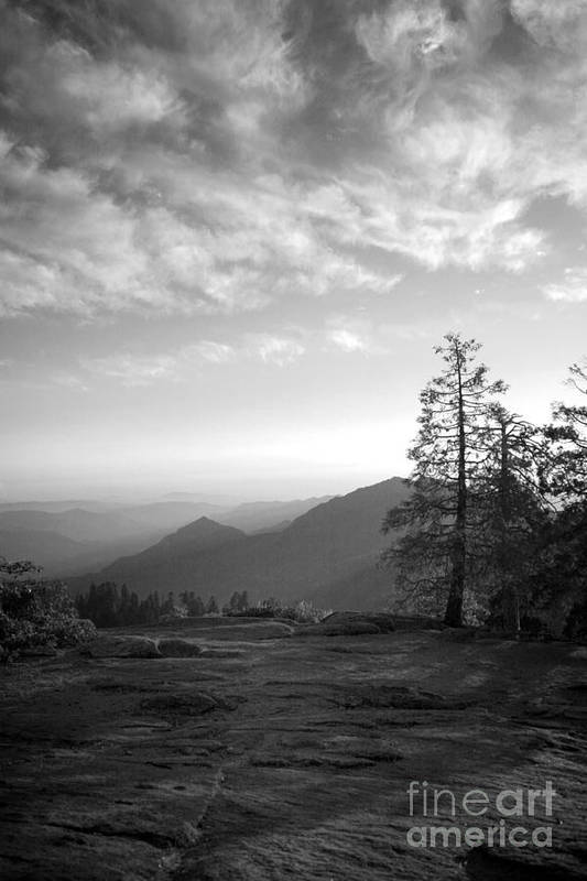 Dusk Art Print featuring the photograph Dusk In Sequoia by Timothy Johnson