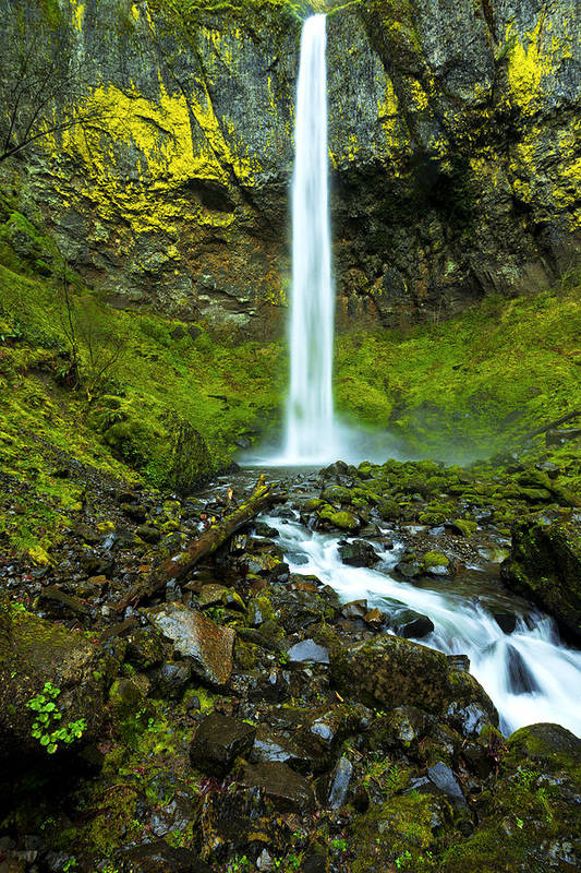 Northwest Art Print featuring the photograph Elowah's Elegance by Chad Dutson