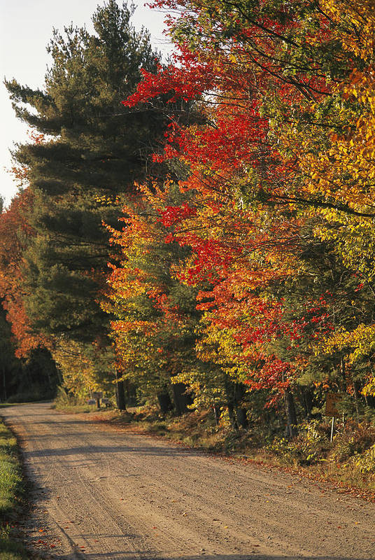 North America Art Print featuring the photograph Fall Colors Line A New England Road by Heather Perry