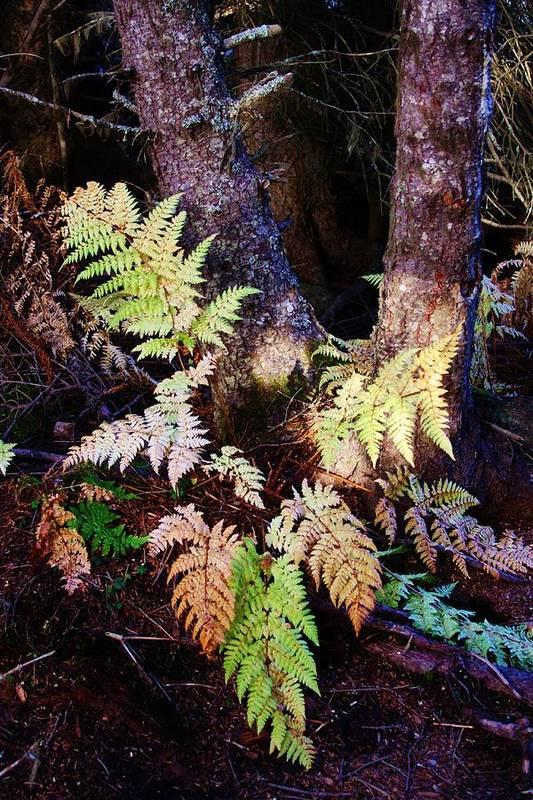 Alaskan Ferns In Autumn Art Print featuring the photograph Fall Ferns by Lori Mahaffey