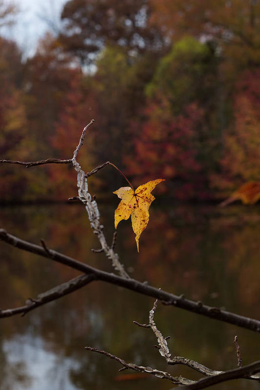 Leaf Leaves Autumn Foliage Yellow Art Print featuring the photograph Fall Leaf by Brian Schultz