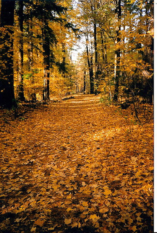 Trees Art Print featuring the photograph Fall by Stephanie Moore