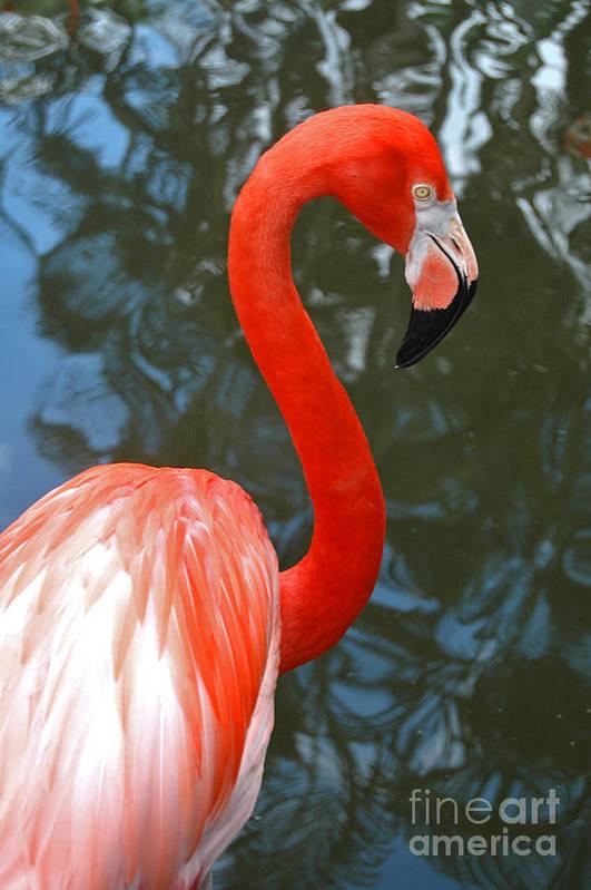 Flamingo Art Print featuring the photograph Flamingo In Profile by Allan Einhorn
