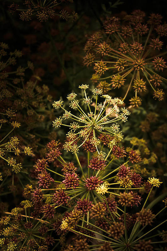 Loriental Art Print featuring the photograph Floral Fireworks #02 by Loriental Photography