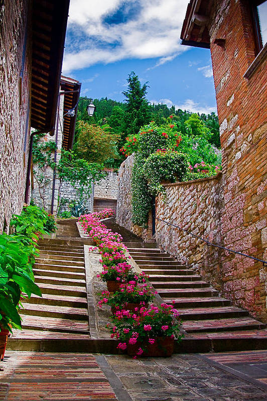 Gubbio Art Print featuring the photograph Flowered Walk by John Daly