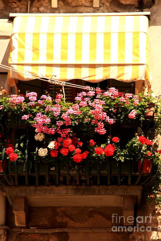 Flowers Art Print featuring the photograph Flowers And Awning In Venice by Michael Henderson
