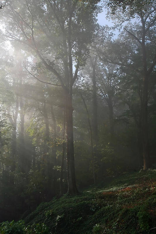 Foggy Art Print featuring the photograph Foggy Forest by James Jones