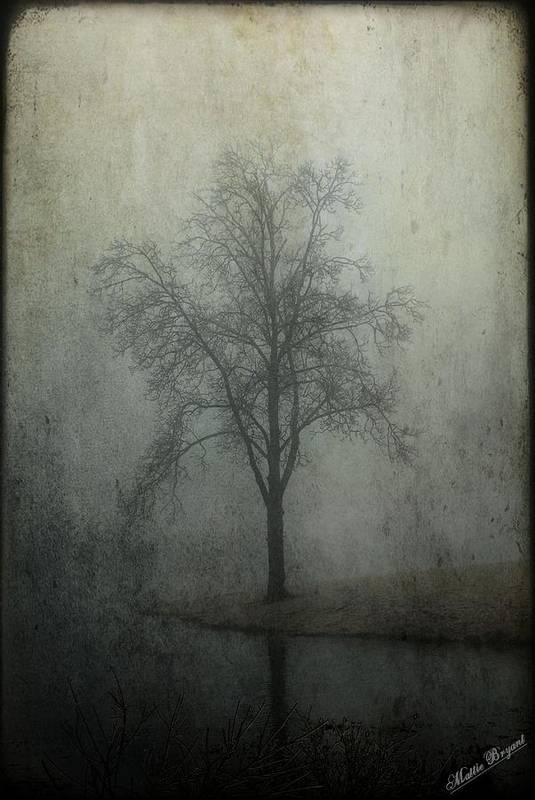 Fog Art Print featuring the photograph Foggy Morn by Mattie Bryant
