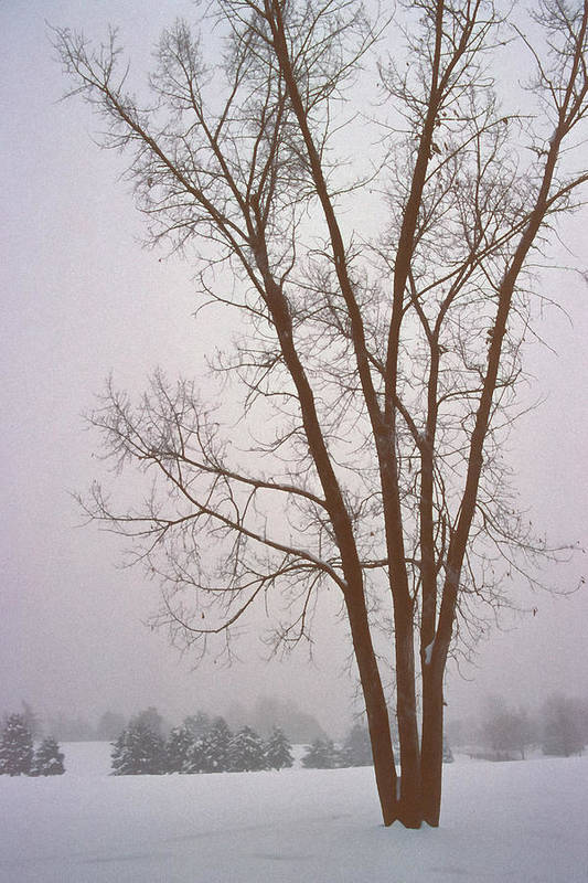 Nature Art Print featuring the photograph Foggy Morning Landscape 13 by Steve Ohlsen