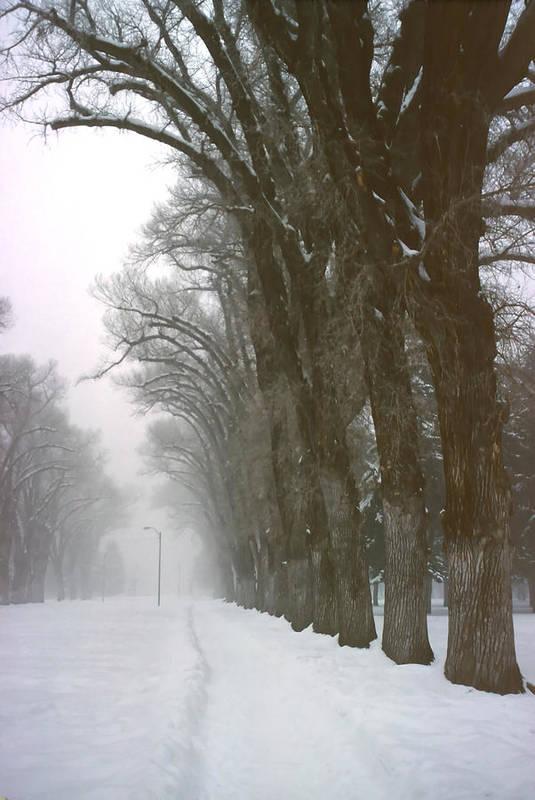 Park Art Print featuring the photograph Foggy Morning Landscape 5 by Steve Ohlsen