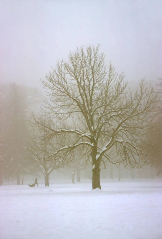 Nature Art Print featuring the photograph Foggy Morning Landscape 7 by Steve Ohlsen