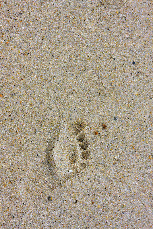 062315 Art Print featuring the photograph Footprint by Wayne Vedvig