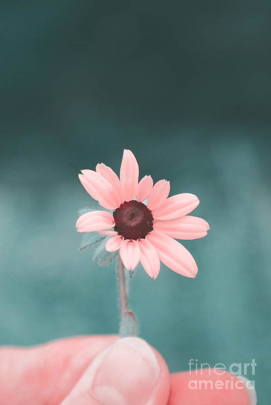 Flower Art Print featuring the photograph For You by Aimelle