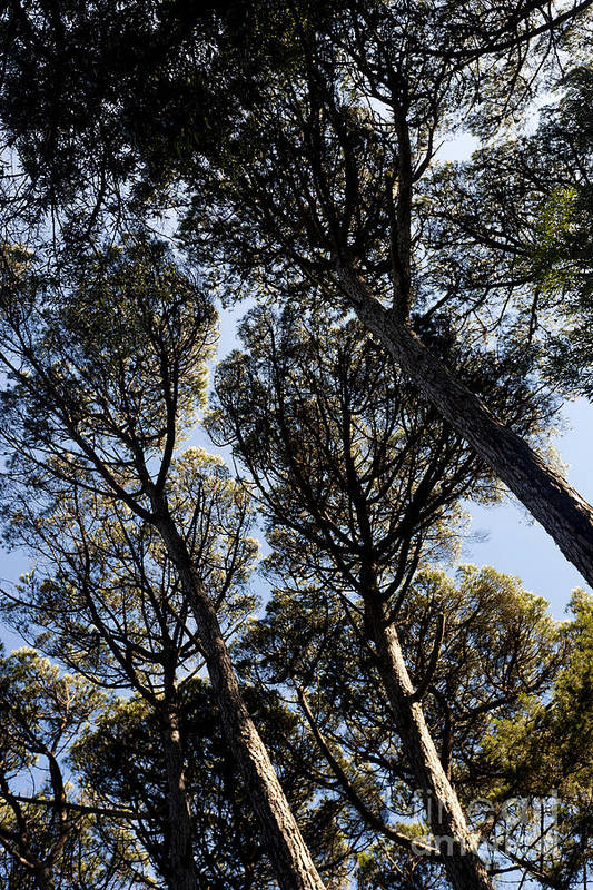 Blue Art Print featuring the photograph Forest Of Sintra by Andre Goncalves