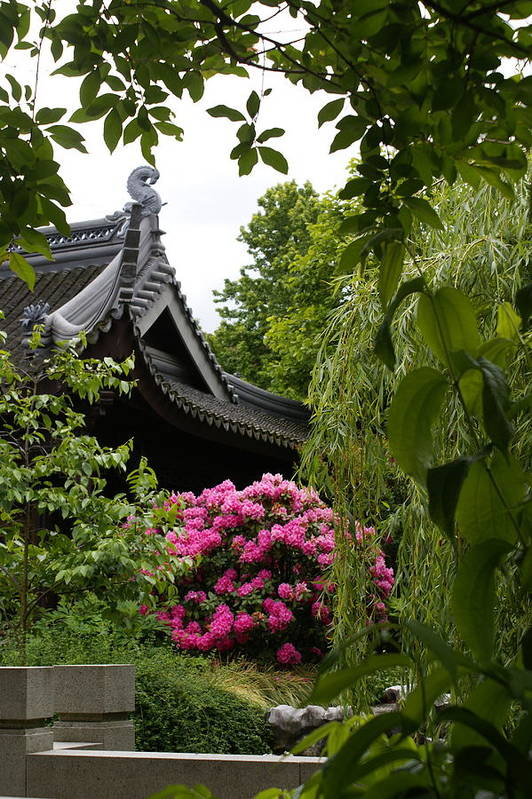 Chinese Garden Art Print featuring the photograph Garden View by Sonja Anderson