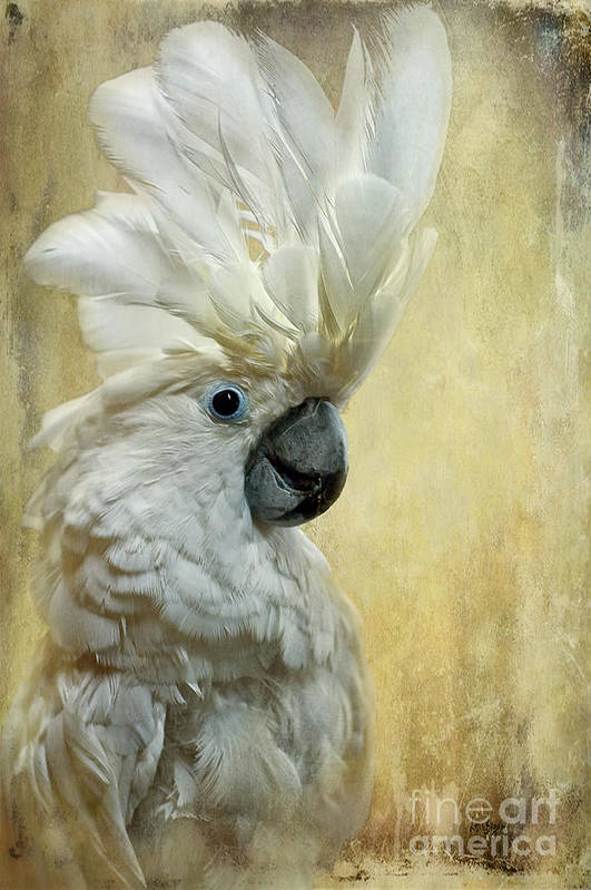 Cockatoo Art Print featuring the photograph Glamour Girl by Lois Bryan