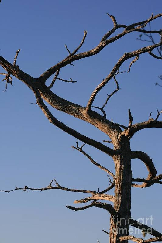 Tree Art Print featuring the photograph Gnarly Tree by Nadine Rippelmeyer