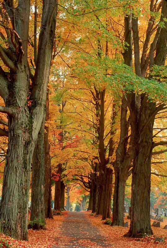 Fall Art Print featuring the photograph Golden Avenue by Raju Alagawadi