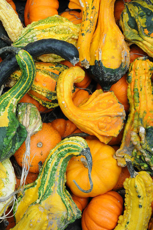 Gourds Art Print featuring the photograph Gourds by Terese Loeb Kreuzer