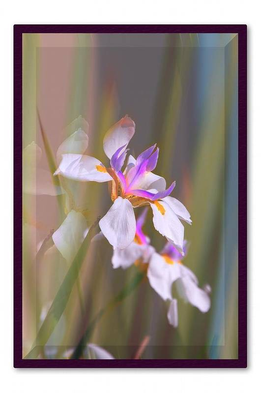 Flowers Art Print featuring the photograph Grace by Lynn Andrews