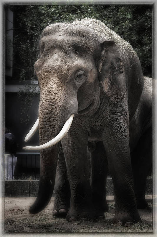 Elephant Art Print featuring the photograph Hanging Out by Joan Carroll