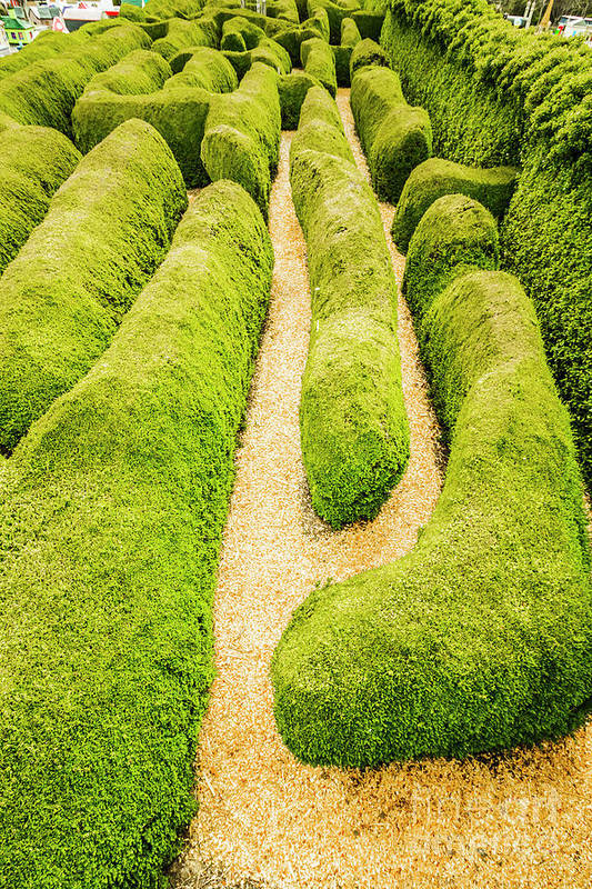 Hedge Maze Art | Fine Art America