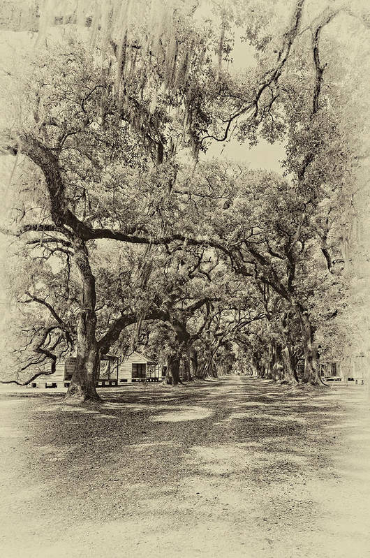 Evergreen Plantation Art Print featuring the photograph Historic Lane Antique Sepia by Steve Harrington