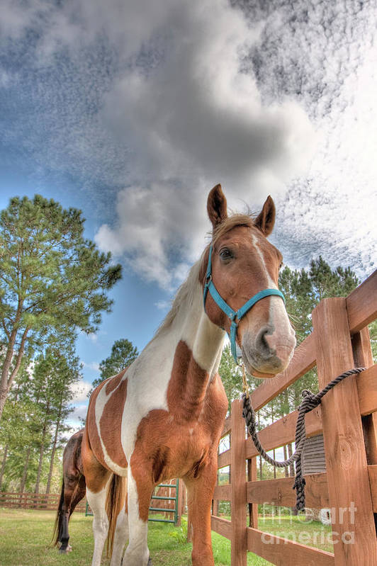 Horses Art Print featuring the photograph Horses by Ted Reynolds