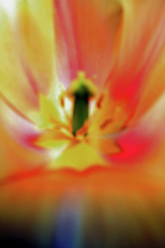 Flower Art Print featuring the photograph Inner Self Vertical by Scott Mahon