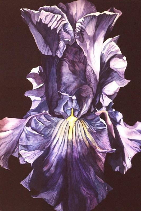 Flower Art Print featuring the painting Iris At Night by Alfred Ng