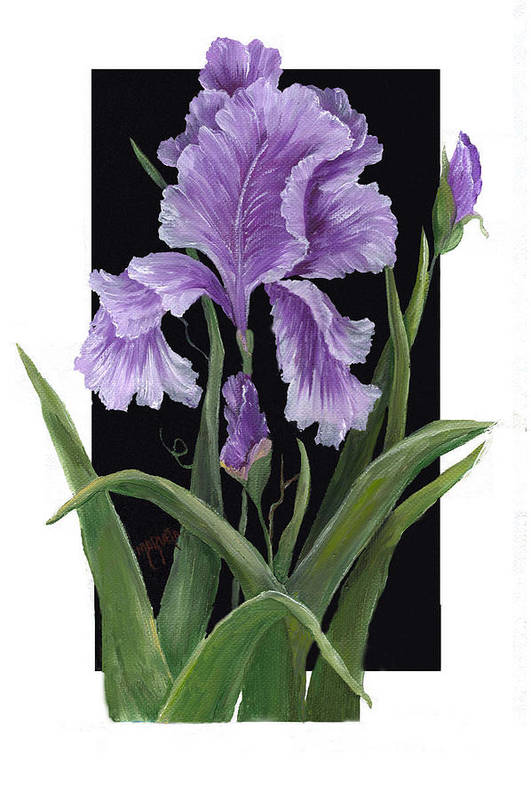 Paining Art Print featuring the painting Iris One by Marveta Foutch
