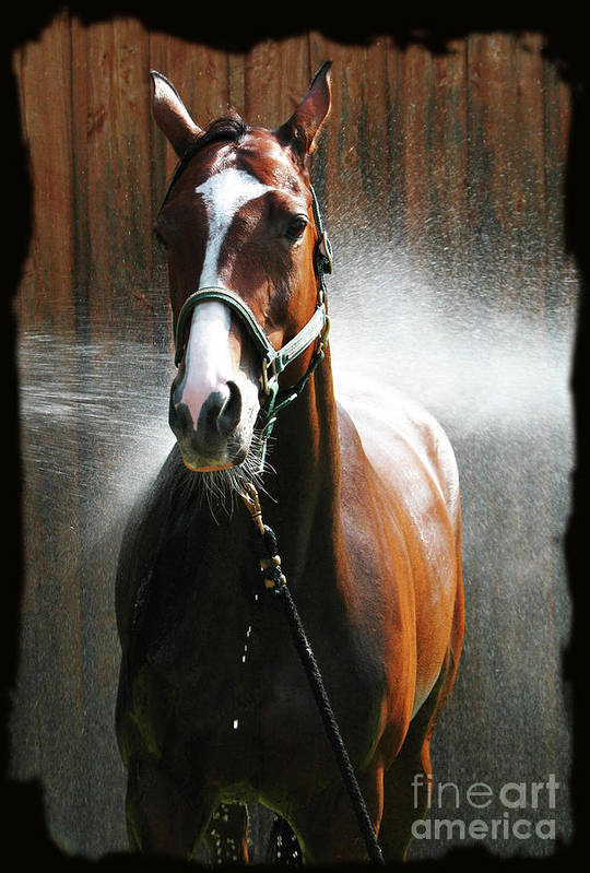 Deborah Johnson Art Print featuring the photograph Ivys Shower by Deborah Johnson