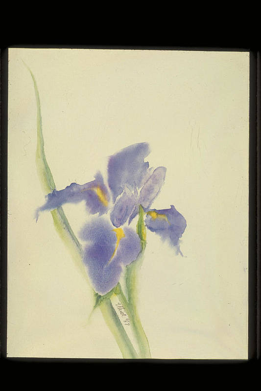 Watercolor Art Print featuring the painting Japanese Iris by Nancy Ethiel