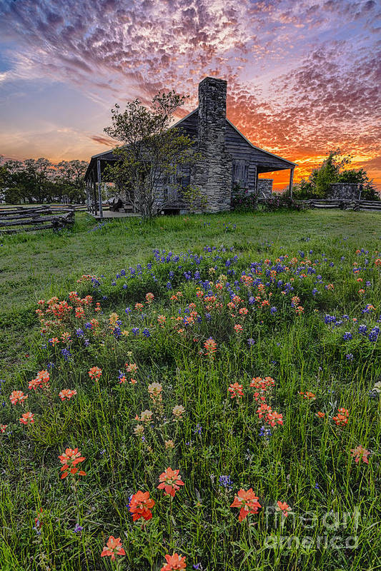Independence Art Print featuring the photograph John P Coles Cabin And Spring Wildflowers At Independence - Old Baylor Park Brenham Texas by Silvio Ligutti