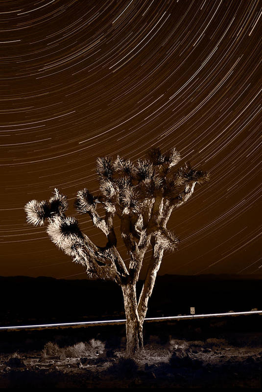 California Art Print featuring the photograph Joshua Tree Night Lights Death Valley Bw by Steve Gadomski