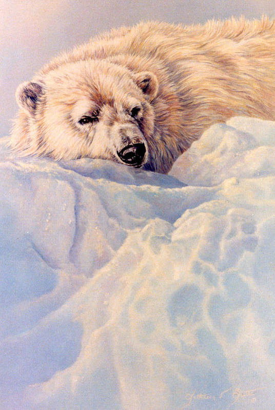 Wildlife Portrait Art Print featuring the painting Just A Peek by Kathleen V Butts
