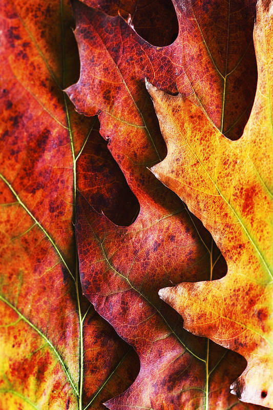 Autumn Art Print featuring the photograph Layers Of Shades Of Autumn by Vishwanath Bhat